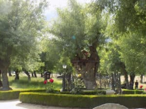 The tree where Our Lady appeared in Prado Nuevo