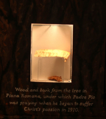 Wood & bark from the tree under which Padre Pio was praying when he received the Stigmata